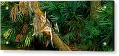 Anhinga Anhinga Anhinga On A Tree Acrylic Print by Panoramic Images