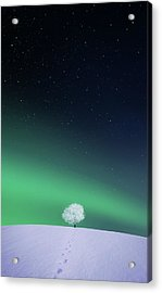 Apple Acrylic Print by Bess Hamiti