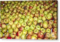 Apples Acrylic Print by Steven Ralser