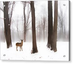 As Winter Calls Acrylic Print by Jessica Jenney