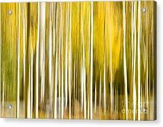 Aspen Glow Acrylic Print by Bryan Keil