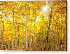 Aspen Morning Acrylic Print by Darren  White