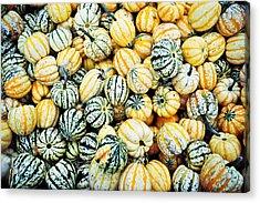 Autumn Gourds Acrylic Print by Crystal Hoeveler