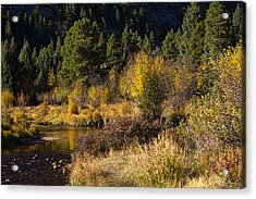 Autumn In The Rockies Acrylic Print by Anne Rodkin