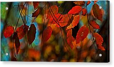 Acrylic Print featuring the photograph Autumn Magic by John Harding
