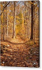Autumn Trail Acrylic Print by Brian Jannsen