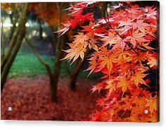 Autumnal Forest Acrylic Print by Les Cunliffe