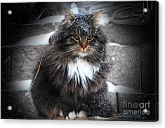 Baby It's Cold Outside Acrylic Print by The Stone Age