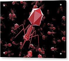 Bacteriophage T4 Viruses Acrylic Print by Maurizio De Angelis
