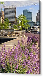 Baltimore Spring Flowers Acrylic Print by Marianne Campolongo