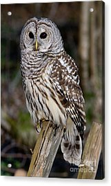 Acrylic Print featuring the photograph Barred Owl by Les Palenik