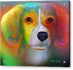 Beagle Acrylic Print by Marlene Watson