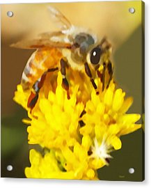 Acrylic Print featuring the painting Bee On A Yellow Flower by Marian Cates