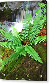 Acrylic Print featuring the photograph Beside The Trolley Trail by Dana Sohr