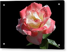 Acrylic Print featuring the photograph Bicolordette by Doug Norkum