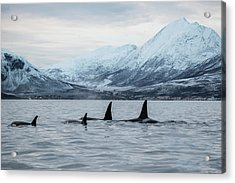 2 Big 2 Small Acrylic Print by By Wildestanimal