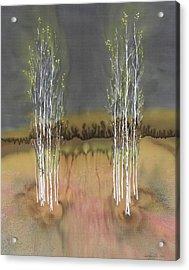 2 Birch Groves Acrylic Print by Carolyn Doe
