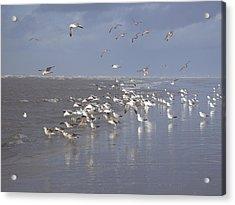 Birds At The Beach Acrylic Print