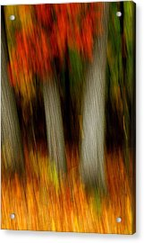 Blazing In The Woods Acrylic Print
