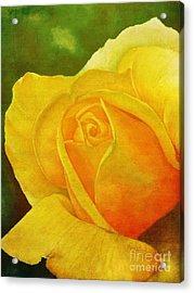 Blooming Beauty Acrylic Print