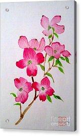 Blooming Dogwood Acrylic Print