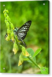 Blue Butterflies In The Green Garden Acrylic Print by Gina Koch