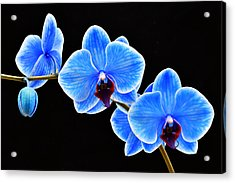 Blue Sapphire Phalaenopsis Orchid Photograph By Robert Jensen