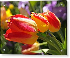 Bowing Tulips Acrylic Print by Rona Black