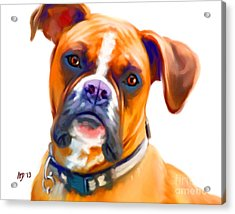 Boxer Dog Art Acrylic Print by Iain McDonald