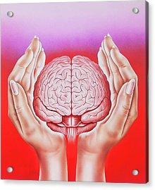 Brain Protection Acrylic Print by John Bavosi