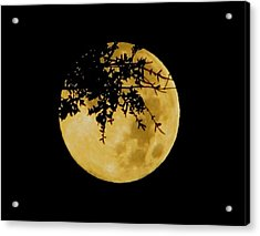 Branched Acrylic Print