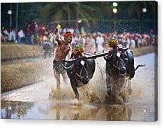 Buffalo Race Acrylic Print