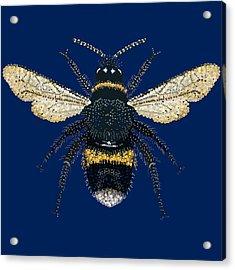 Bumblebee Bedazzled Acrylic Print