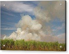 Burning Sugar Cane Acrylic Print