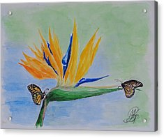 2 Butterflies On A Bird Of Paradise Acrylic Print by Kerstin Berthold