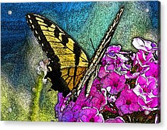 Butterfly Acrylic Print by Andy Lawless