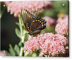 Butterfly Acrylic Print by Denise Pohl