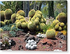 Cactus Acrylic Print by Jim McCullaugh