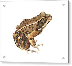 California Red-legged Frog Acrylic Print