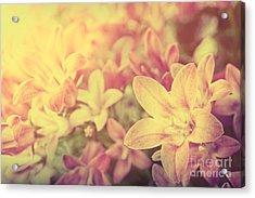 Campanula Floral Background Acrylic Print by Mythja  Photography