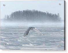 Canada, Ontario, Barrie Acrylic Print by Jaynes Gallery