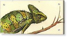 Chameleon Acrylic Print by Juan  Bosco