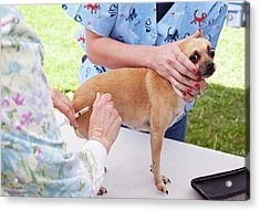 Charity Dog Vaccination Event Acrylic Print by Jim West