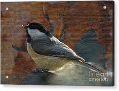 Acrylic Print featuring the photograph Chickadee In Autumn by Janette Boyd
