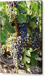 Colorful Grapes Acrylic Print by Carol Groenen