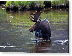 Cooling Off Acrylic Print by Jim Garrison