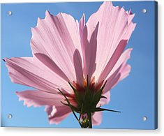 Acrylic Print featuring the photograph Cosmos 3 by Gerry Bates
