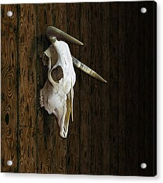 Cow Skull Acrylic Print by James Larkin
