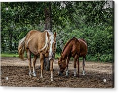 Curiosity Acrylic Print by Doug Long