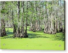 Cypress Island Preserve Acrylic Print by Jim West